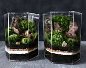 Custom Star Wars Terrarium in Hex Jar