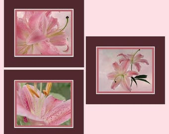 CIJ SALE Stargazer Lily Photos, Photo Collection, Pink Lily Collection, Cottage Florals Art, Photo Wall Art, Garden Floral Art, Garden Lilie