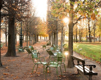 Paris Photography, Autumn Light in The Tuileries, Paris France, Paris Gardens, Paris decor, Fall Leaves, Rebecca Plotnick, Parisian, French