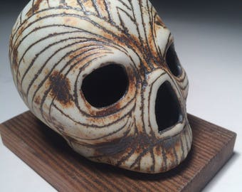 Diamond Horn Weathered Skull