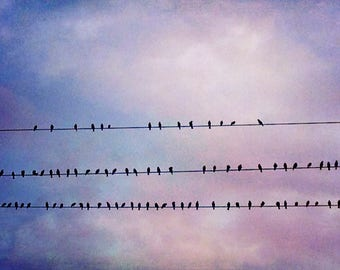 Gathering Abstract Art Bird Artwork Fine art photography digital artwork large artwork Birds on Wire