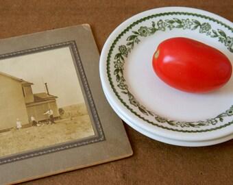 Ironstone Plates. Vintage Restaurant Ware. Green Transferware. Buffalo China Kenmore Green. Country French Farmhouse Wall Display Plates.