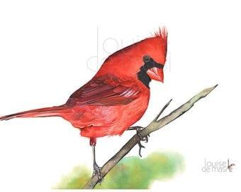 Cardinal print of watercolor painting, cardinal watercolor painting print, christmas wall art, 5 by 7 size print c2014
