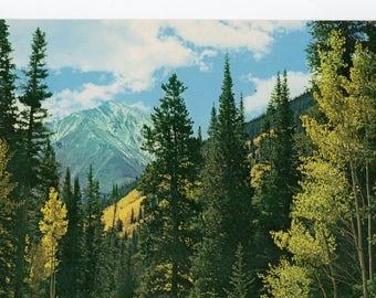 Torrey's Peak Forest Nature Colorado CO Highway 6 Vintage Postcard