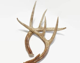 Vintage Deer Antlers, Large Eight Point, Rustic Pair Natural Antlers, Real White Tail Deer, Rustic Home Decor