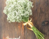 Simple Dried Baby's Breath Wedding Package for rrd . .