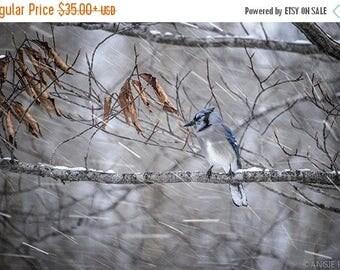ON SALE Blue Jay Fine Art Bird Photography, Home Decor Art Print, Bird in the Forest Wall Art, Winter Nature Print, Falling Snow, Bird Art