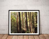 redwood photography / nat...