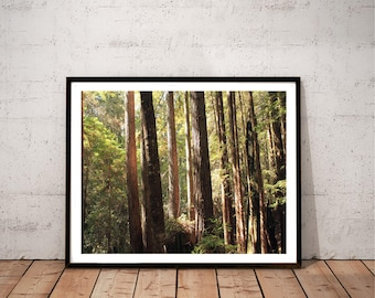 "redwood photography / nature forest tree art print / green brown large wall art / 11x14 20x24 photo art print / ""sunlit redwood forest 2"""