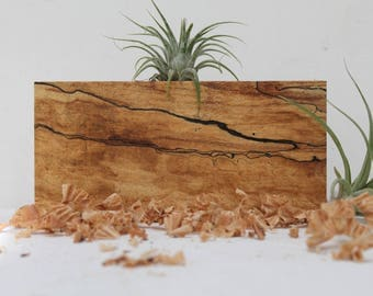 Spalted Maple Air Plant holder  M09