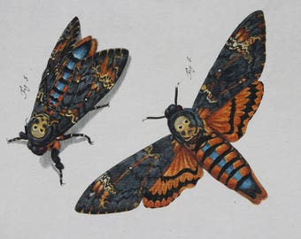 Gorgeous Hand Colored Antique Print 1700's -A Death's Head Moth by August Roesel von Rosenhof-Copper Plate Engravings