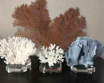 Set of Three Mounted Coral - Blue, Lace and Table