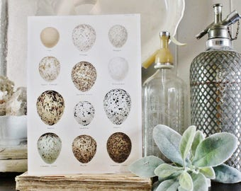 Vintage EGG Chart Wood Sign Print Farmhouse Decor Page Wall Art Print  Fixer Upper Decor Natural History Speckled Egg Botanical Easter