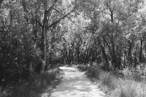 The Path Black and White Fine Art Photography Print