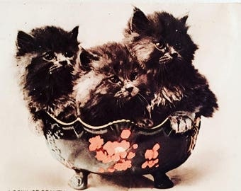 Beautiful Victorian Cat Picture On Board