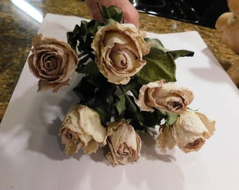 Dried Roses, Roses, Blush pink dried roses, Pink dried roses