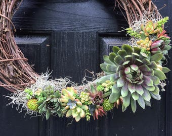 Large live succulent wreath on 20 inch base