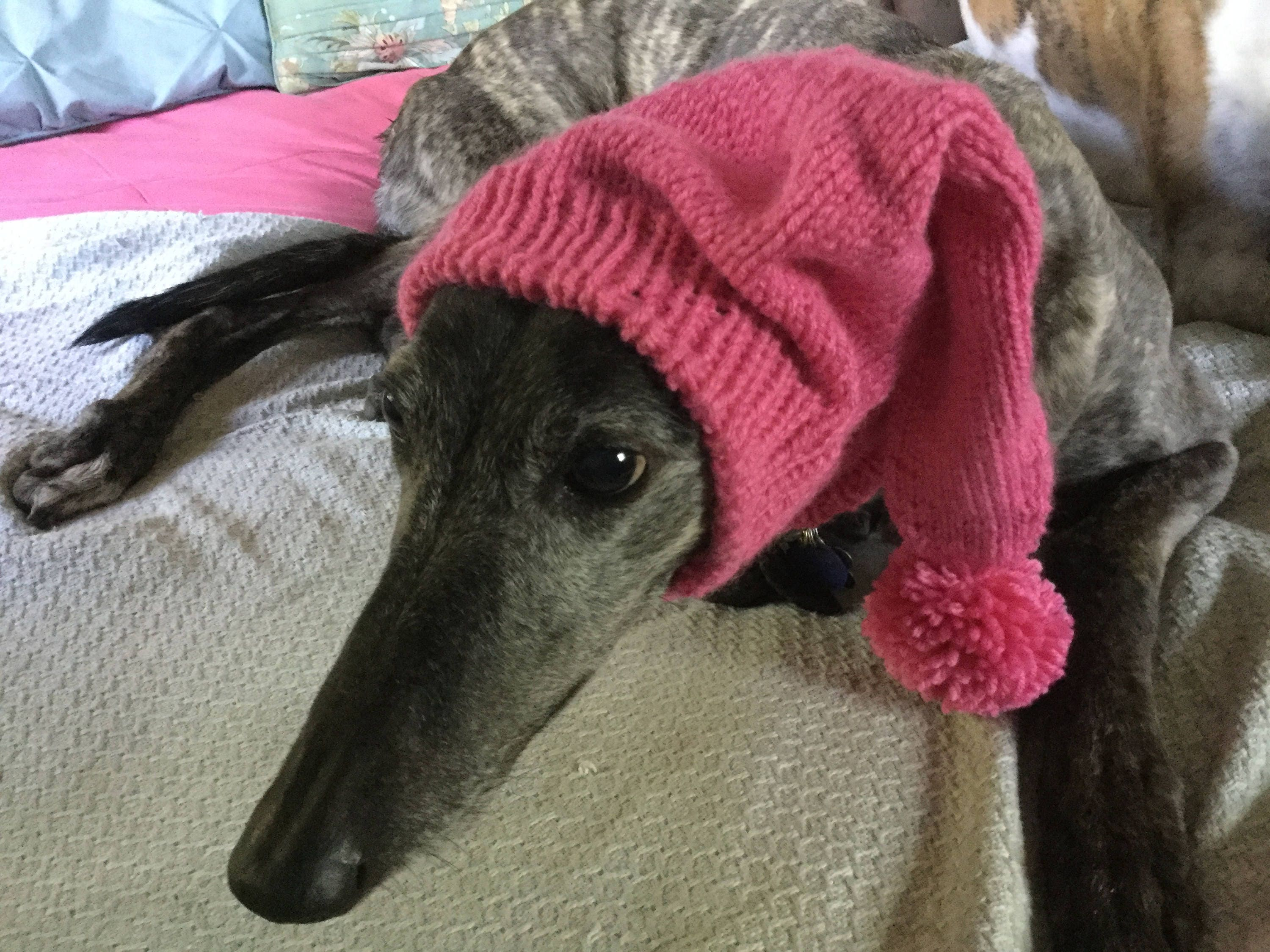 Greyhound hat with snood pink rose washable wool blend bankloansurffo Images