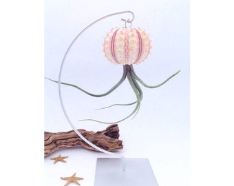 Hanging Sea Urchin Shell Air Plant with Stand