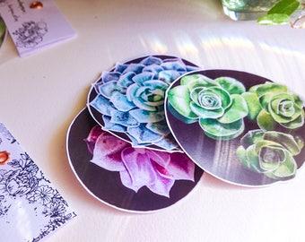 Set of 3 Stickers, Vinyl Laptop Stickers, Succulents, Succulent Stickers, Painting Stickers, Original artwork Stickers