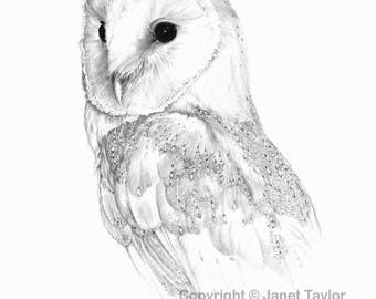 BARN OWL drawing - Print of original graphite drawing by Jan Taylor.