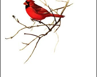 The Cardinal painted by J F Landsdowne for Birds of the Eastern Forest. The page is approx. 9.5 inches wide and 13 inches tall.