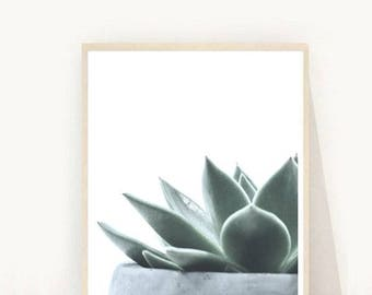 Succulent Art Print, Succulent Poster, Cactus Print, Wall Art Prints, Printable Art, Wall Art, Digital Download, Home Decor, Wall Decor