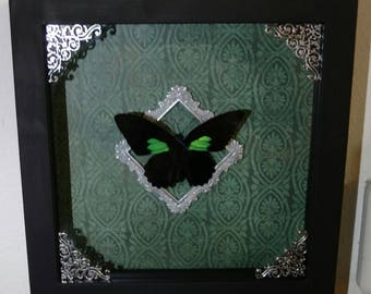 Butterfly Insect Art Display Shadowbox