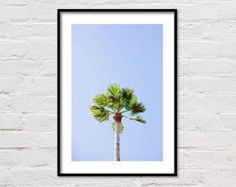 Palm Tree Print, Botanical Print, Tropical Print, Palm Tree Wall Art, Printable Palm Tree, Summer Print, Palm Tree Poster, Botanical Poster