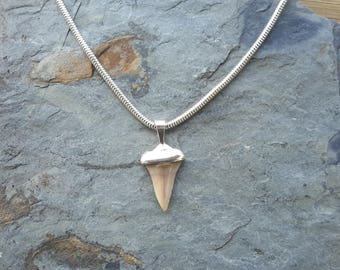 No.60 Small Shark's Tooth Pendant set in .950 Sterling Silver