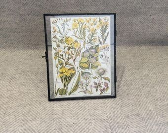 Vintage framed botanical drawing, flower illustrations, botanical print, floral, in glass frame, Green leaves Yellow Daisies Dandelions
