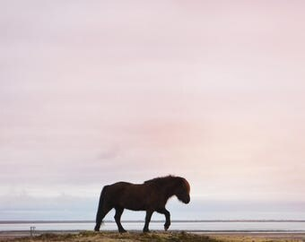Icelandic Horse in Sunset - PRINT