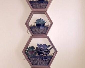 Hexagon planter /showcase