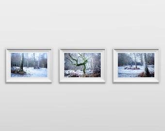 Set of 3: Winter Trees, Original Photography Print, Landscape, Woodland, Wall Art, Decor