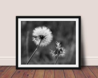 Dandelion Print, Black and White Dandelion, Dandelion Wall Art, Dandelion Poster, Black and White Print, Botanical Print, Floral Printable
