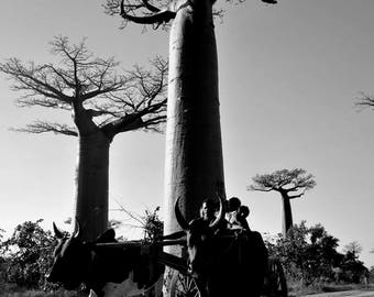 "Photography black and white: ""One way"" - Morondave, MADAGASCAR - 2015"