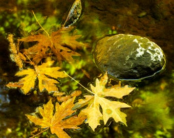 Leaf Reflections, Leaf Photography, Nature Photography, Autumn, Fall Photo, Wall Art, Leaf Art, Leaf Photo, Creek Photo, Autumn Photograph