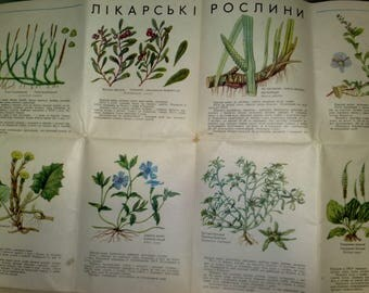 Medicinal Plants of the USSR - 30 drawings  - Vintage Botanical Book, 1971. Wild Herbaceous Drug Herbs Flower Illustration Print gift