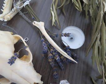 "Bird bones, ""Alaunus"". witch real bones wiccan taxidermy weird vertebrae silver bronze"