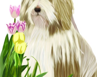 Hand-drawn Brown Bearded Collie greeting card with Tulips and foliage