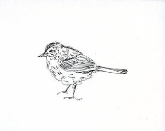Sketchbook Sale - Bird #11 Original Ink Line Drawing - 8x10 Songbird Original Art