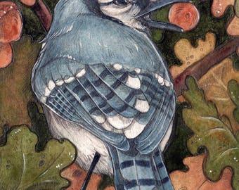 "Bluejay in Oak Tree...Original 5""x7"" Illustration"