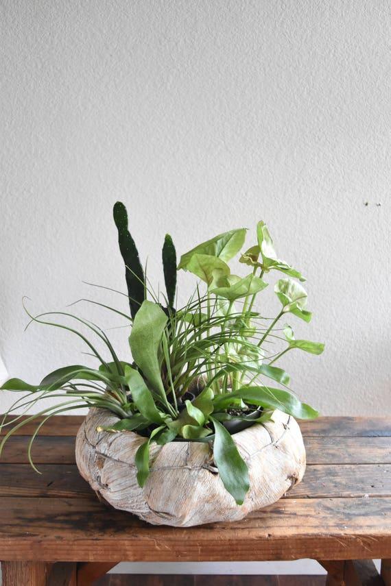 vintage woven banana leaf husk basket planter / boho
