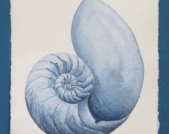 Original watercolour painting of a chambered nautilus sea shell cross section in indigo and blues