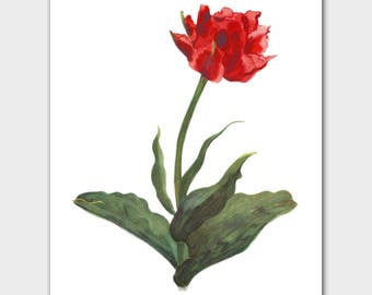 """Spring Tulip Art (Bedroom Wall Decor, Red Flower Minimalist Print, Anniversary Gift for Wife) --- 8x10 or 11x14 """"Electra Tulip"""""""