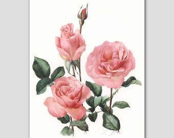 """Rose Print, 1960s """"Tiffany"""" Bedroom Wall Art, Vintage Botanical Decor, Pink Roses Flower Artwork No. 33"""