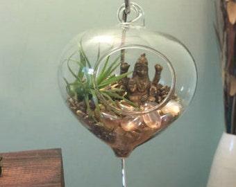 Air Plants Terrarium Spiritual