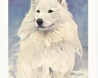 Samoyed white working herding sled dog breed Siberia vintage print illustration gift for dog lover portrait by Willy E. Bär  8x11.5 inches