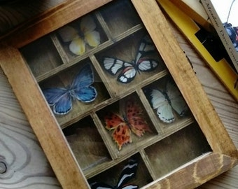 Hand Painted Butterflies in a Display Box