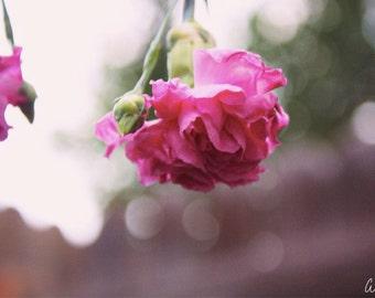"""Original Flower Photo Print """"Merveille"""" - Home Decor"""